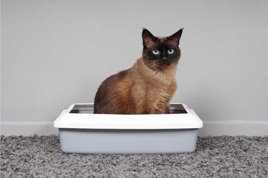 Cat sits in her litter box