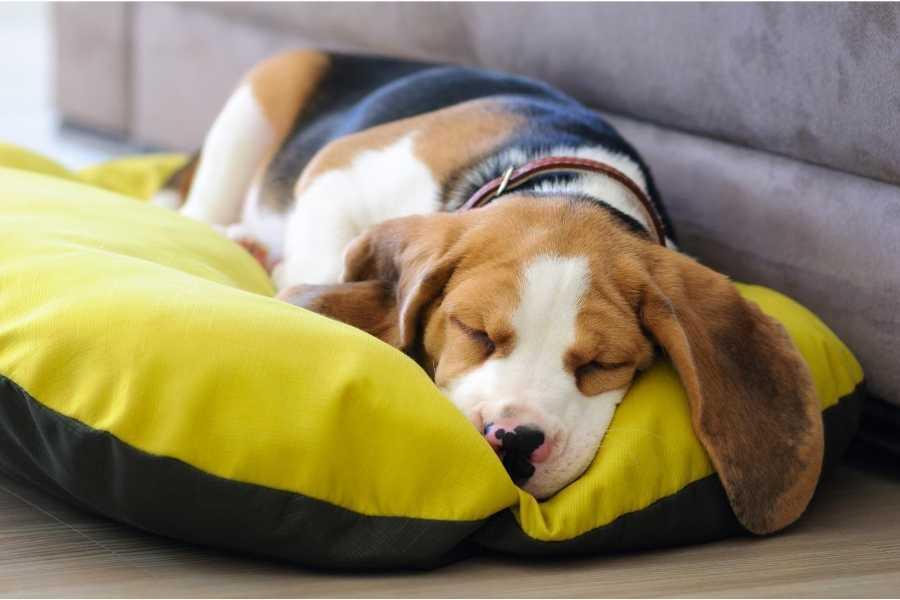 Dog sleeps in his waterproof bed