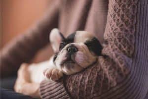 Sleepy puppy