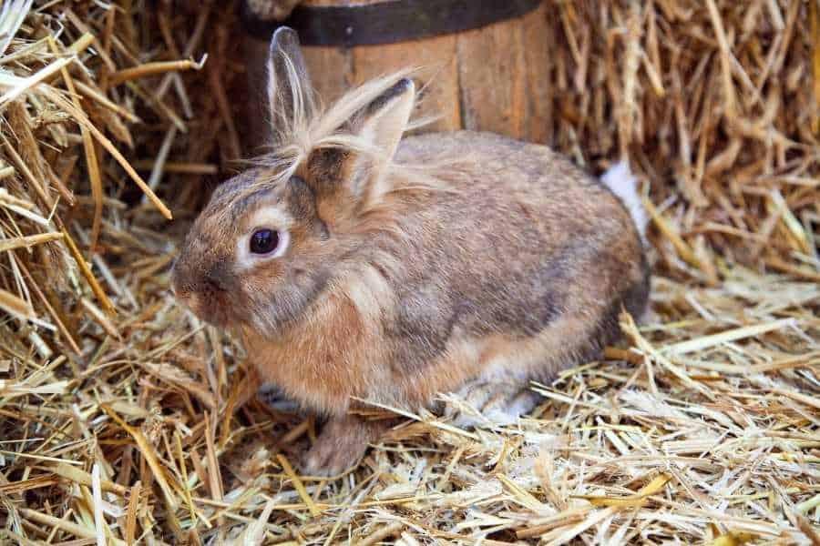 Quality bedding for rabbit