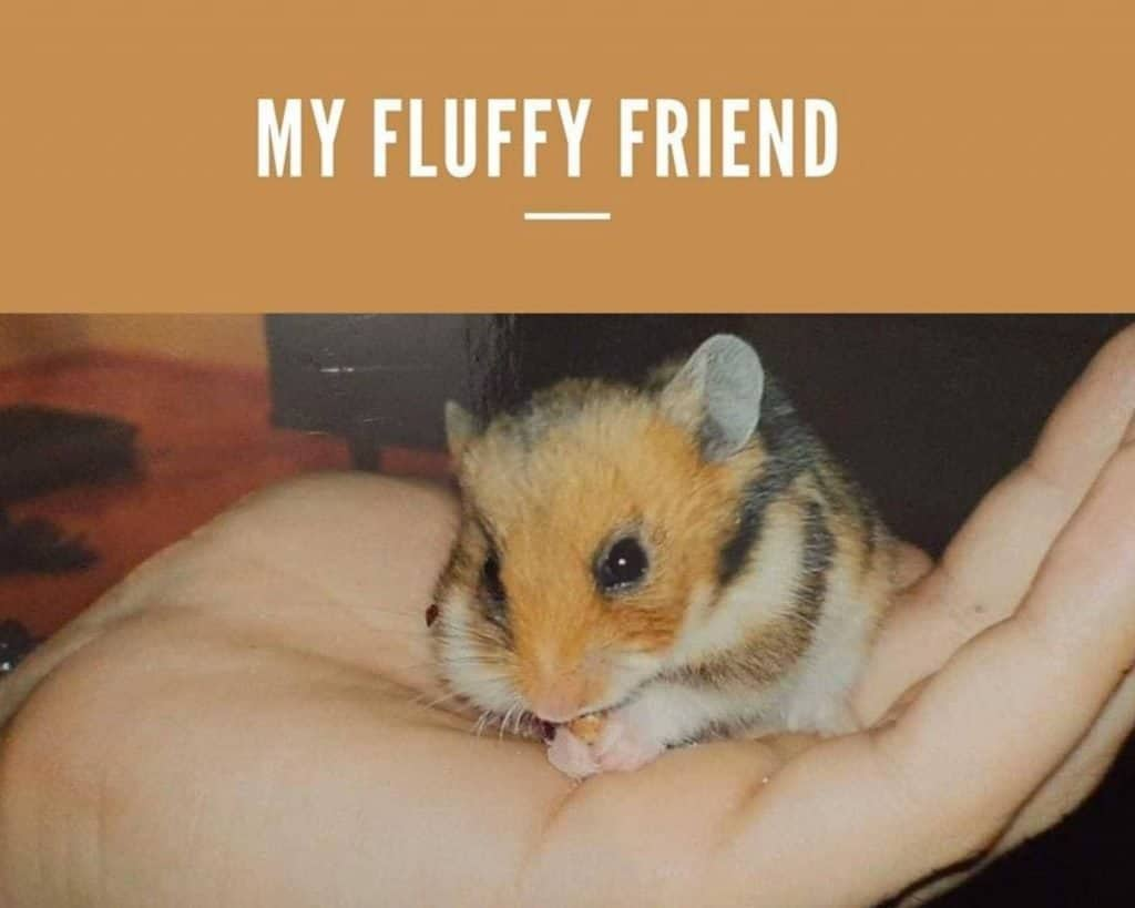 My fluffy friend