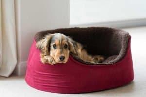 Dog sleep in his bed