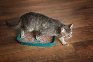 Cat leaves his litter box without track