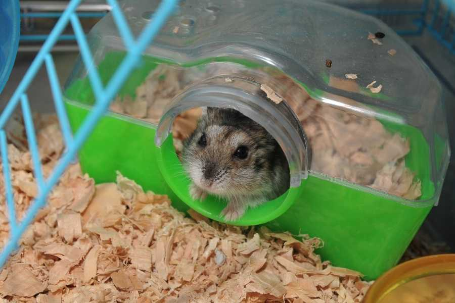 Cage for hamsters