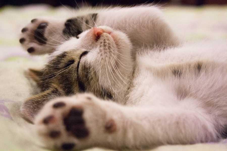 Cat is relaxing