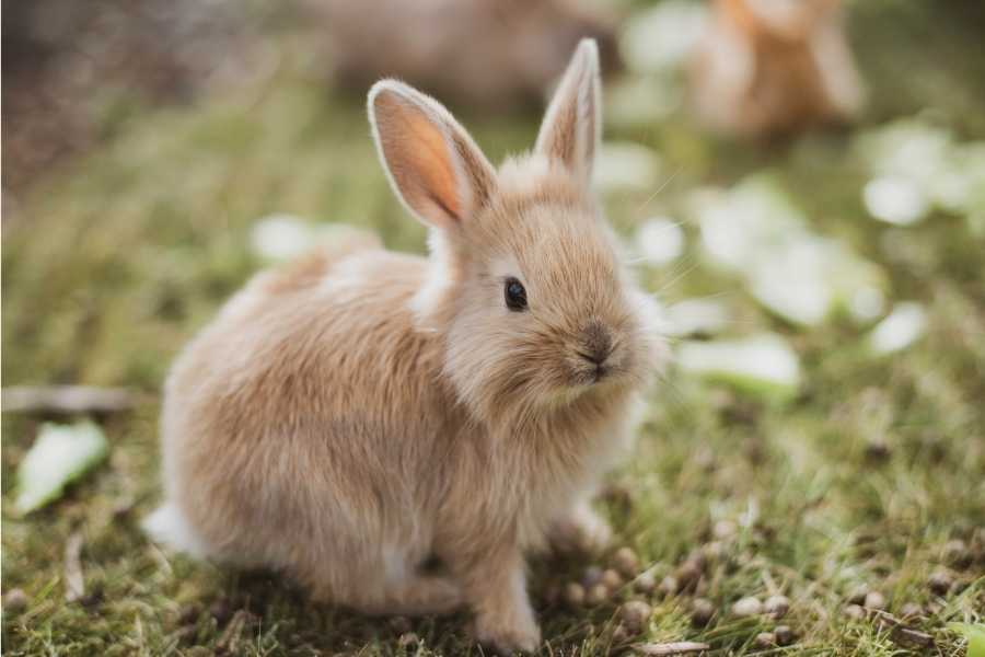 Outdoor care for rabbit