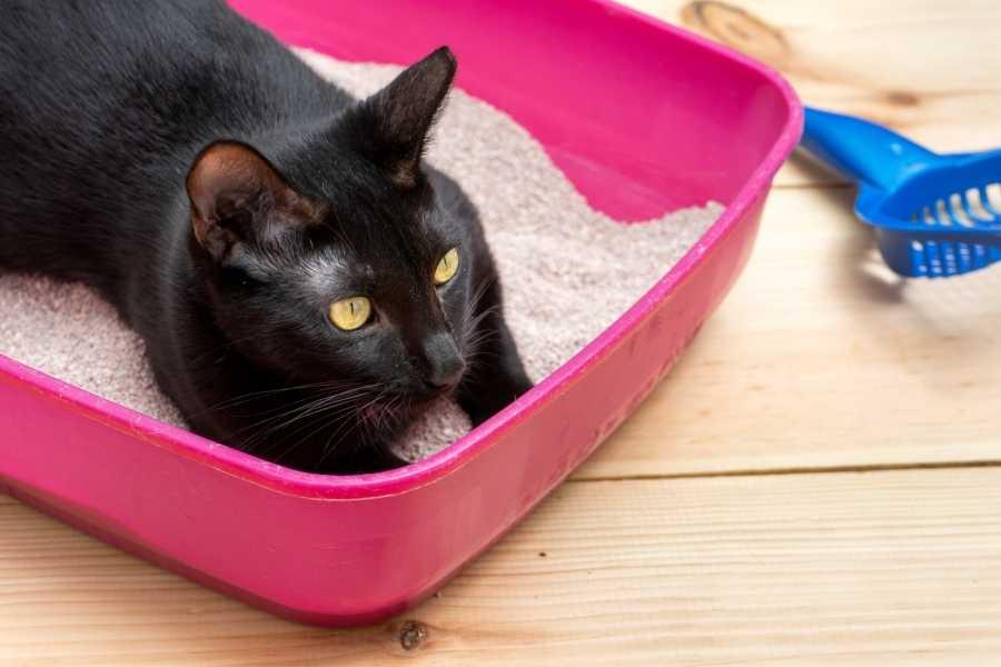 Cat in her dust free litter box