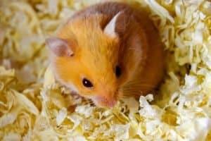 best bedding for hamster