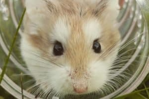 hamster tube for cage