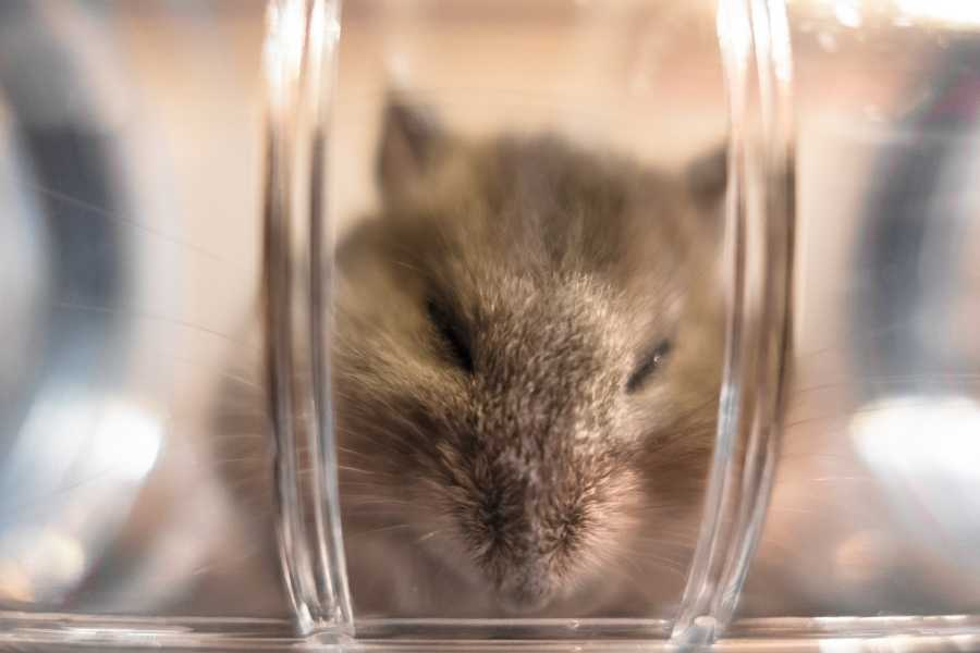 tube for hamster